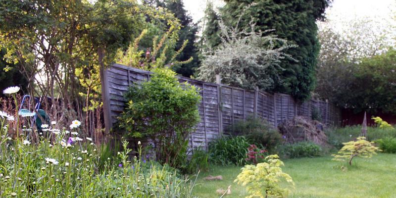 Sudden Edible Gardens